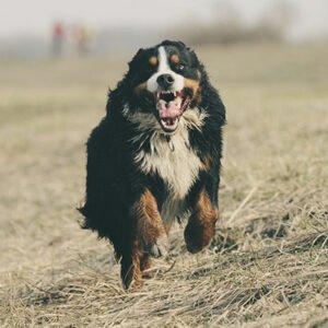 chien sportif